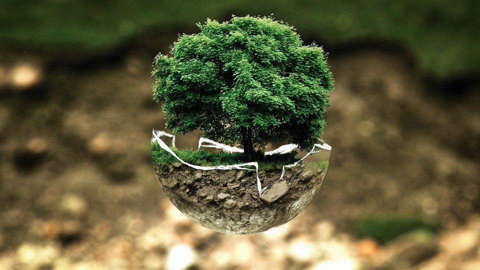 Inquinamento atmosferico, cancro, sopravvivenza, Fondazione Bartolo Longo, tumore, shinrin-yoku,