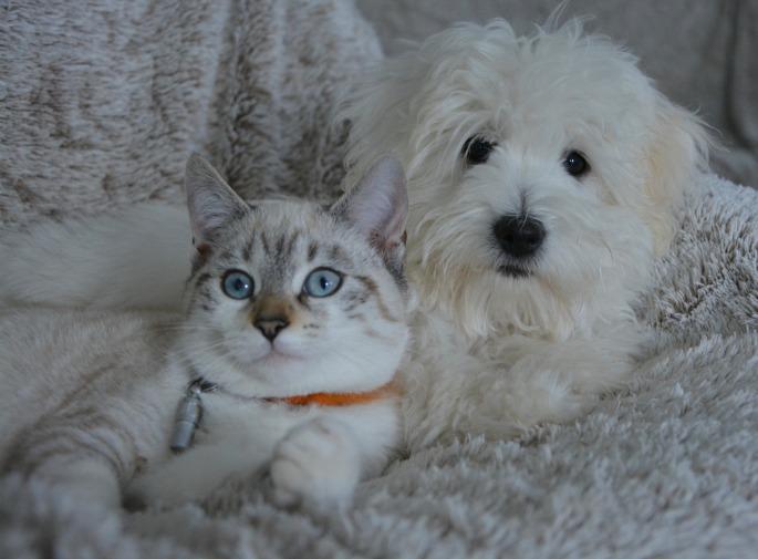 pet therapy, cancro, tumore, malati, fondazione bartolo longo,