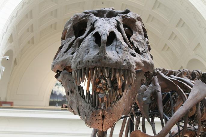 tumore, dinosauri, cancro, paleopatologia,