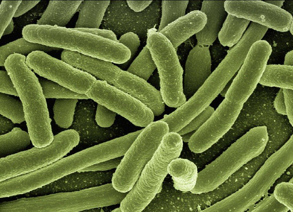 batteri, tumori, microbioma, microbiota,